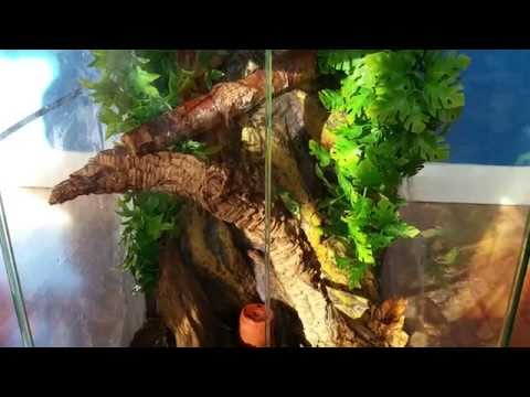 Free and easy way to prevent heat loss from a terrarium