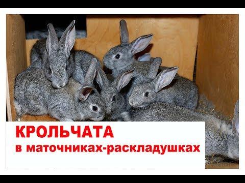 Крольчата в маточниках-раскладушках