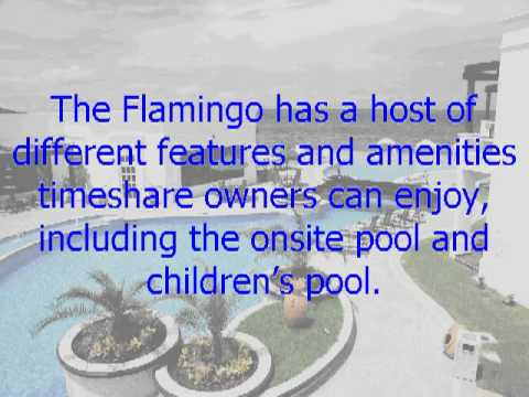 Enjoy Vegas with Your Hilton Grand Timeshare at the Flamingo