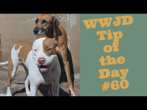 What Would Jeff Do? Dog Training Tip of the Day #60
