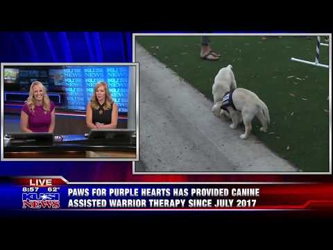 KUSI Good Morning San Diego Showcases Paws for Purple Hearts