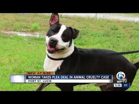 Port St. Lucie woman gets 1 year in jail, 9 years probation for animal cruelty