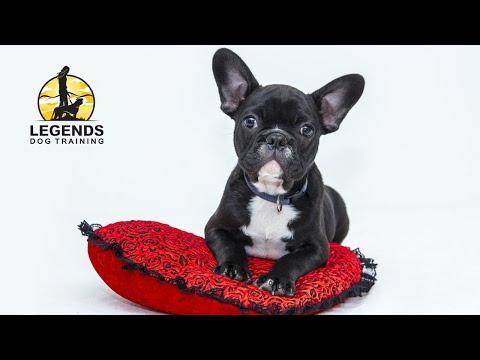 French Bulldog Puppy: Basic Training, Crate