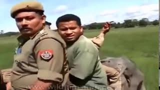 Elephant Vs Man .Angry elephants and many more