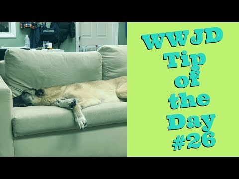 What Would Jeff Do? Dog Training Tip of the day #26 Dogs on Furniture & Beds