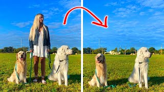 DOGS REACT TO HUMAN DISAPPEARING (Will they behave?)