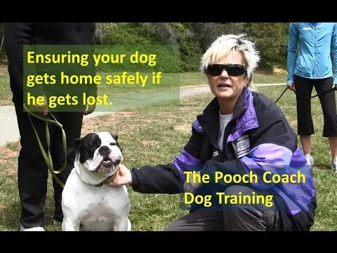 Safety measures to practice in case your dog gets lost