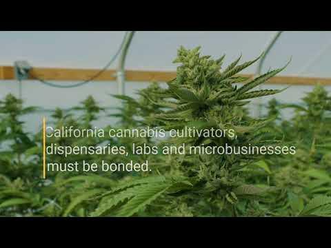 California Cannabis Licensing Bonds