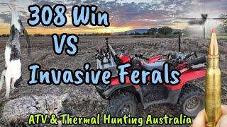 308 Winchester VS Feral Invasive Animals in Australia ||  Pulsar Thermion XQ50 Scope