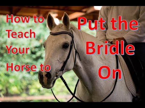 How to Teach Your Horse to put on the Bridle
