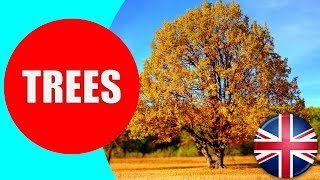 Learn about Trees for Kids - Children Vocabulary Trees Video for Preschool and Kindergarten