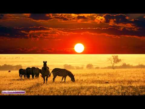 African Music   African Savannah   Relax, Study & Ambience