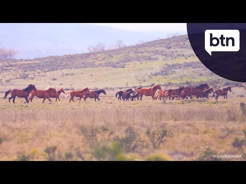 Brumby Control - Behind the News