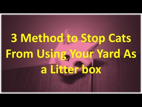 Tree Methods To Stop Cats From Using Your Yard As a Litterbox