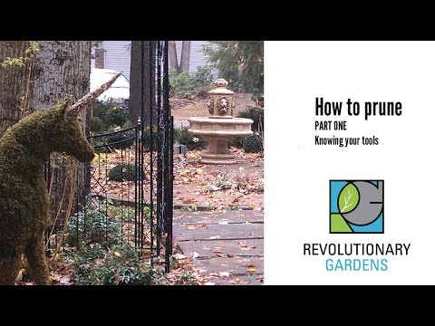 How to Prune: Part 1 - The Tools
