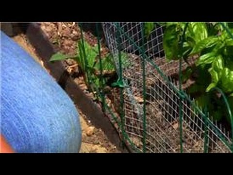 Vegetable Gardening : How to Get Rid of Rabbits in Vegetable Gardens