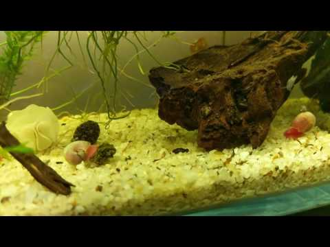 What is the Best Temperature for Breeding Shrimp