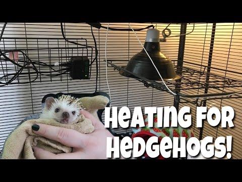 Hedgehog Care: Heat Setup (Ceramic Heat Emitter) + Heat Alternatives