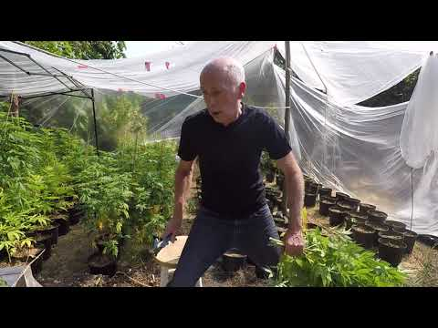 The Craft Grower. Tearing Down The Outdoor Grow.