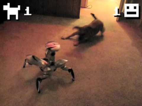 Puppy Vs. Robot! Epic Battle For Territorial Domination!