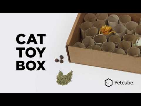 Cat Toy Box - make your own cat toy at home