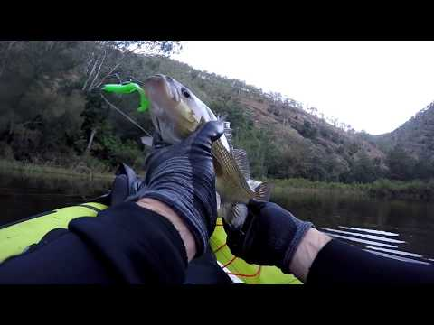AUSTRALIAN BASS ON FROGS - DEADLY LURES - CLOG FROG 7.5