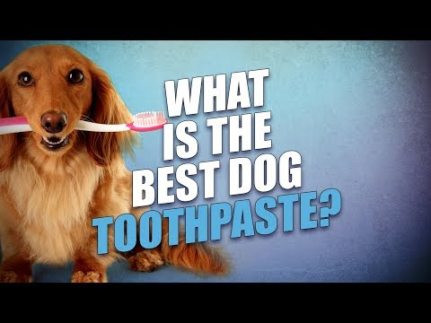 What Is the Best Dog Toothpaste?