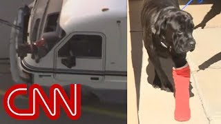 Death-defying dogs survive speed RV chase