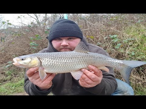 Stick Float Fishing: Winter Chub