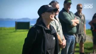Zoo Tales - Kiwi chick release to Motuora Island