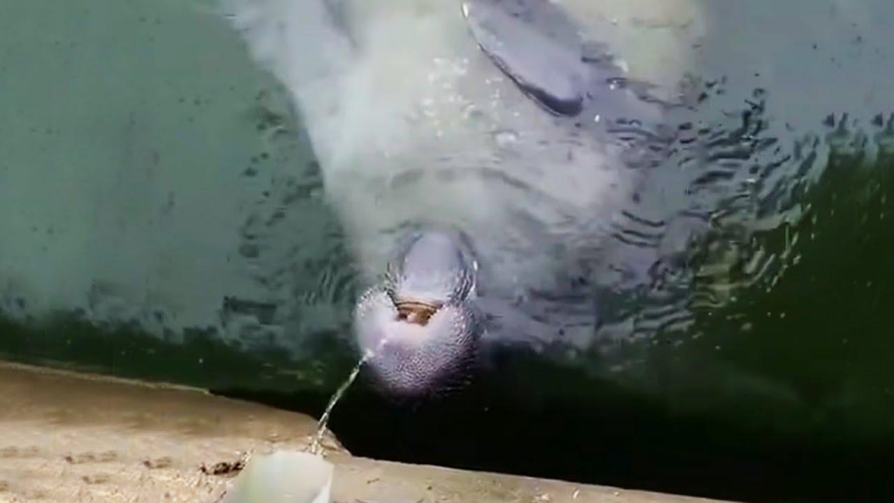 Incredible Lightning Strike Over New York City