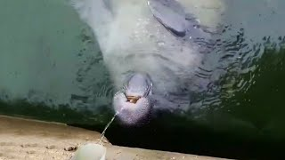 Incredible Lightning Strike Over New York
