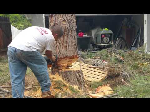 How to safely cut down a tree in your front yard in LA by Shafran 818-485-2657