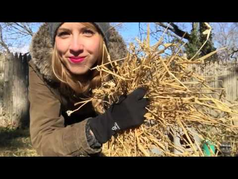 How to Build a Winter Shelter for Cats