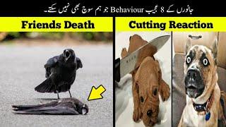 8 Most Unusual Animal Behaviour Ever Seen | جانوروں کی عجیب حرکتیں | Haider Tv