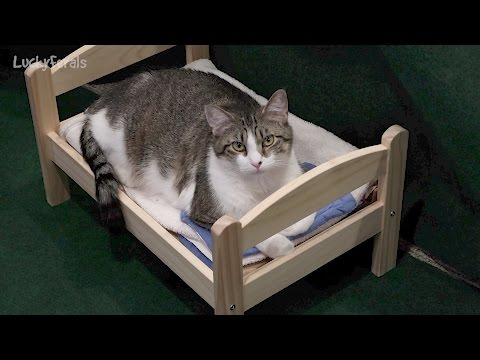 IKEA Cat Bed Update - Duktig Doll Bed - One Small Change