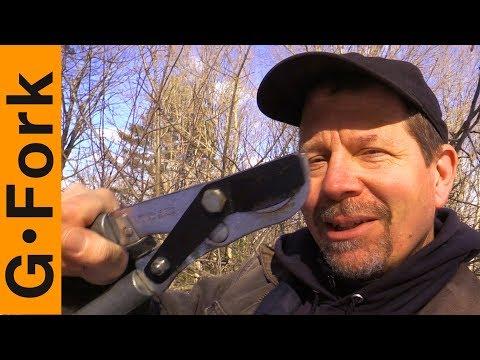 Here's How I Prune A Tree | GardenFork