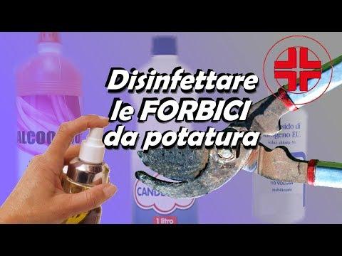 DISINFETTARE FORBICI DA POTATURA