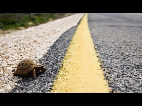 How to Care for a Wild Turtle | Pet Turtles