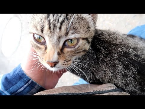 Petting a street cat in Moscow oblast, Russia
