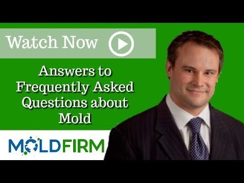What Should You Do If Your Home Has a Mold Problem? | Mold Firm Attorney |  Carson Jeffries |