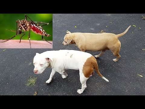 Tips For Keeping Mosquitos Off Your Dogs!!!