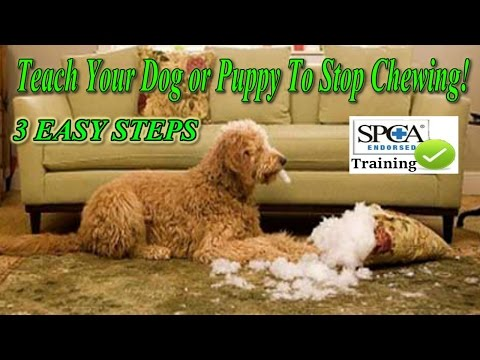 ► How To Teach Your Puppy Or Dog To Stop Chewing ♥ 3 EASY STEPS! ♥ Watch Here :)))