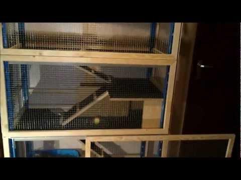 A 4 floor indoor rabbit condo
