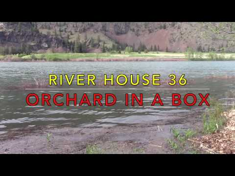 River House 36 - Orchard in a Box