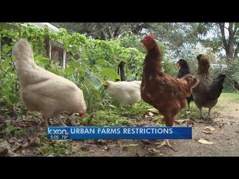 City Council looks at urban farms, Google Fiber