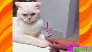 CAT :  Don