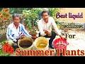 How to Make Best Liquid fertilizer for Summer Flower Plants ?