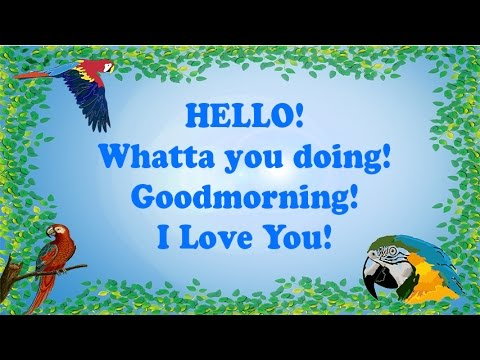 Teach your Parrot to say Hello, Whatta you doing, Goodmorning & I Love you! (With 1 hour breaks)