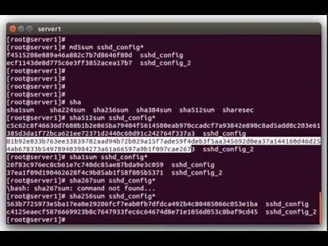 Using File Hashes/Checksums to Compare Files on Linux